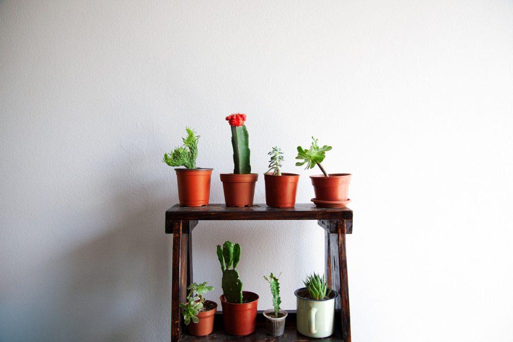 cactus-1413002_1280